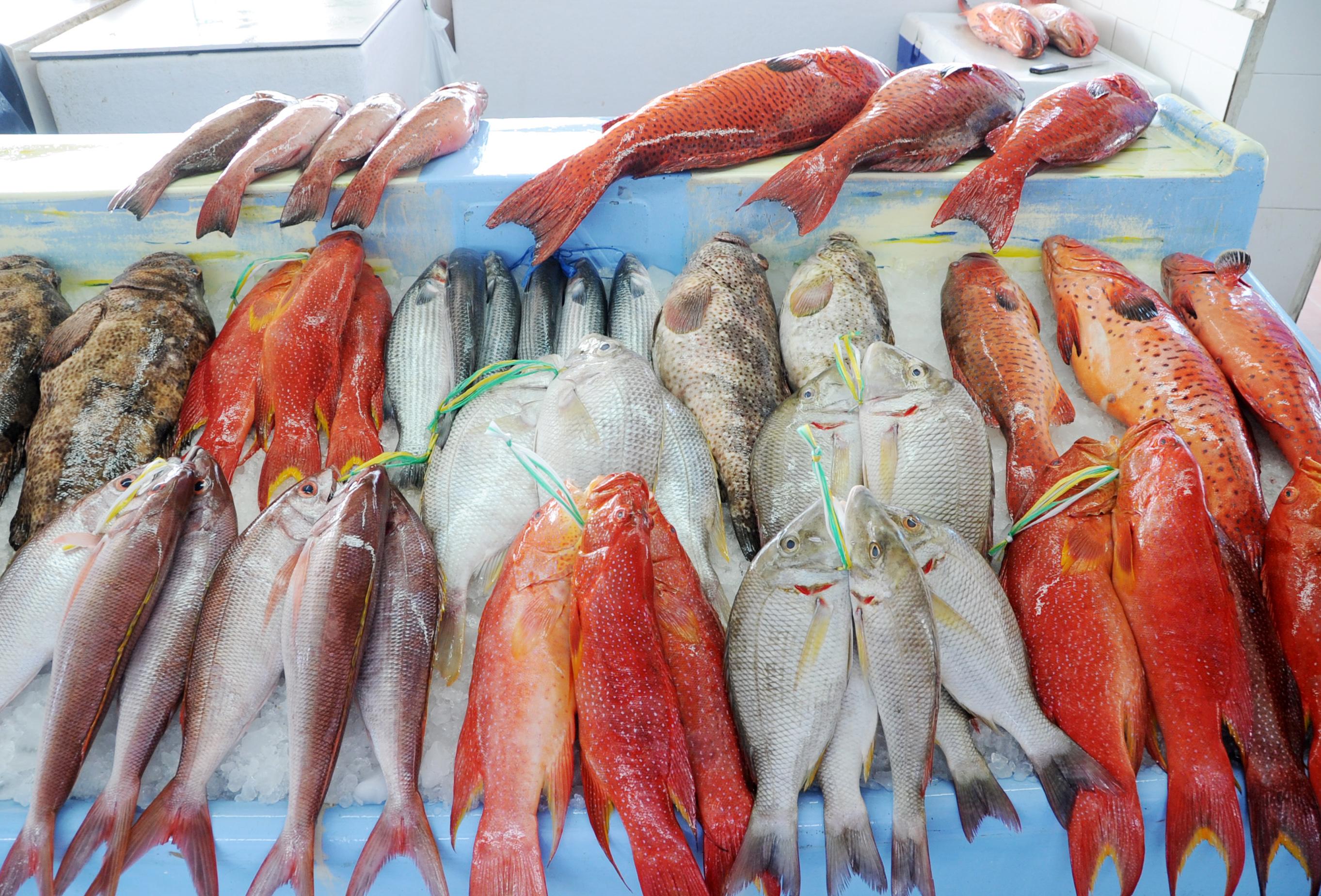الصيد من البحر الاحمر