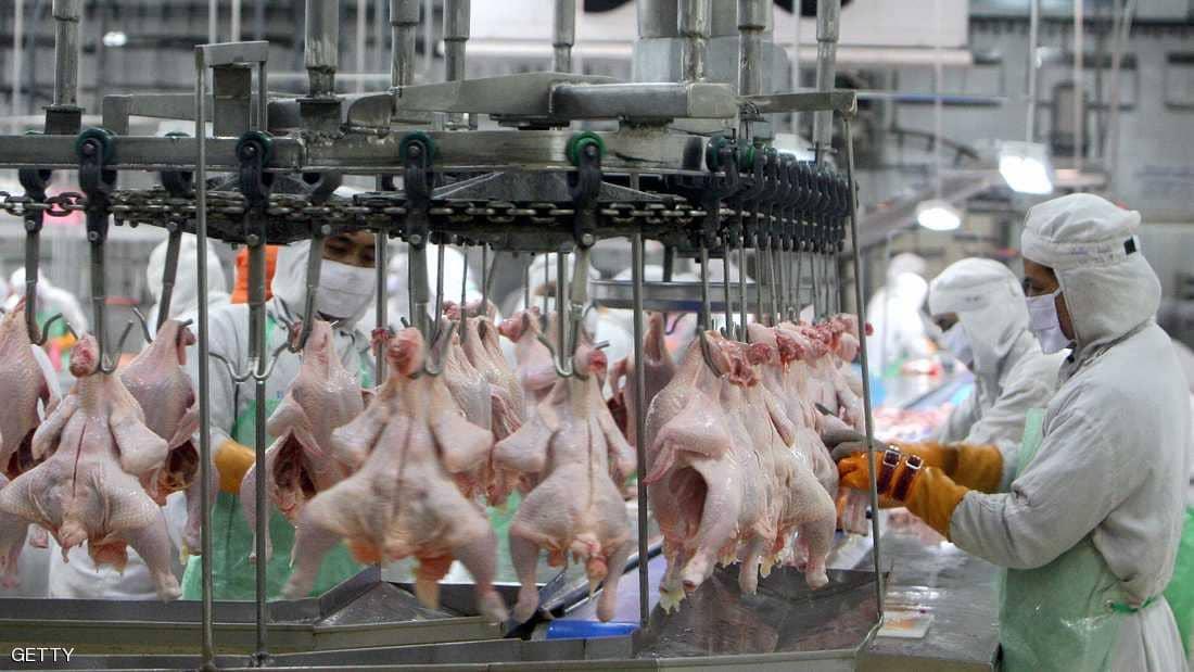 غسيل الدجاج يؤدي الي انتشار البكتيريا الضارة