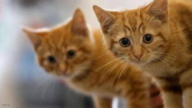 دراسة تكشف تصرفا ماكرا للقطط
