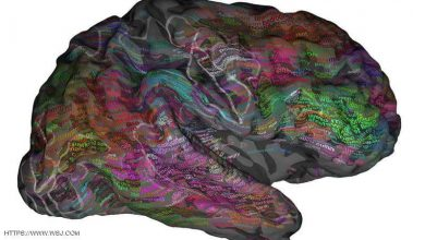 مراقبة تفاصيل عمل الدماغ أصبحت تحت يد الخبراء.