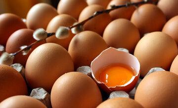 استهلاك البيض أثناء الحمل