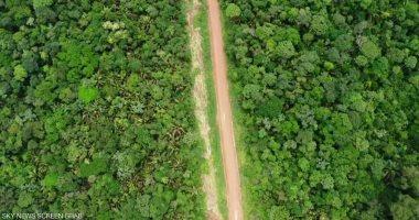 غابات الامازون