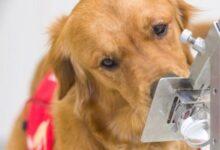 الكلاب البوليسية وفيروس كورونا